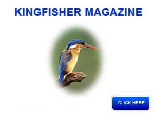 kingfishermag